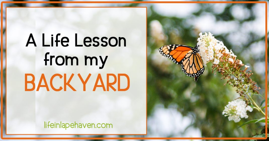 Life in Lape Haven: A Life Lesson from My Backyard - After a harsh winter, we had dead plants that needed to go, only I didn't want to get rid of them, even though they were dead and fruitless.