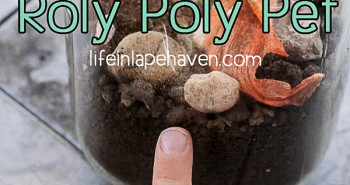 Life in Lape Haven: Saying Yes to a Roly Poly Pet - Pointing to the bugs