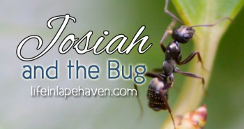 Life in Lape Haven: Write 31 Days - Out of the Mouth of Babes, Josiah and the Bug. How ants and sin are similar.