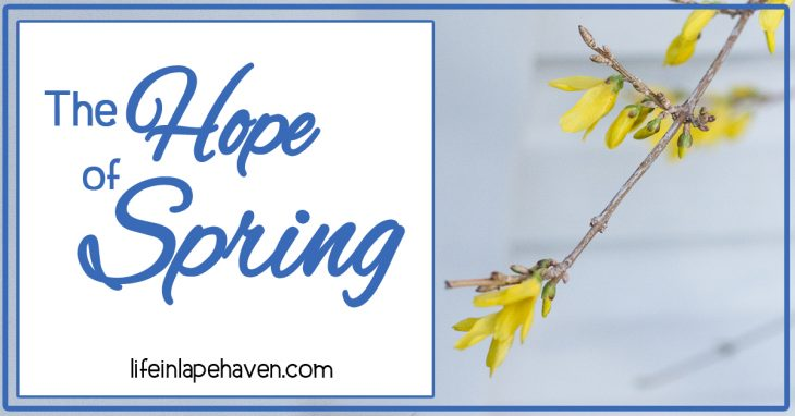 Life in Lape Haven: The Hope of Spring. From azaleas in Georgia to forsythia in Ohio, the arrival of spring is always a time of hope, joy, and new life.